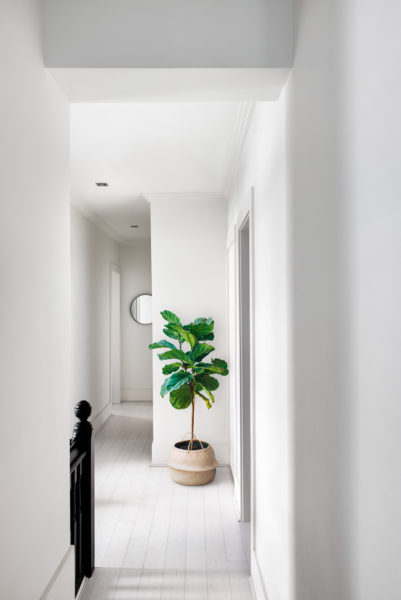 white hallway with a plant in the corner